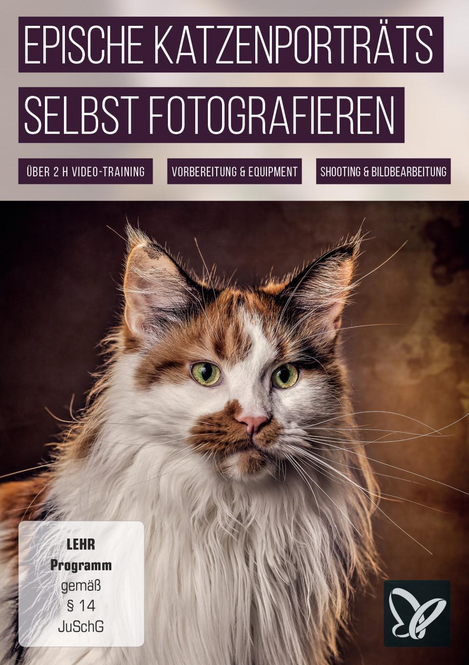 Epische Katzenporträts selbst fotografieren