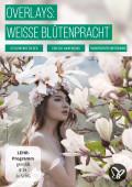 Bilder mit Magnolien, Margeriten und Flieder – weiße Blüten vor transparentem Hintergrund