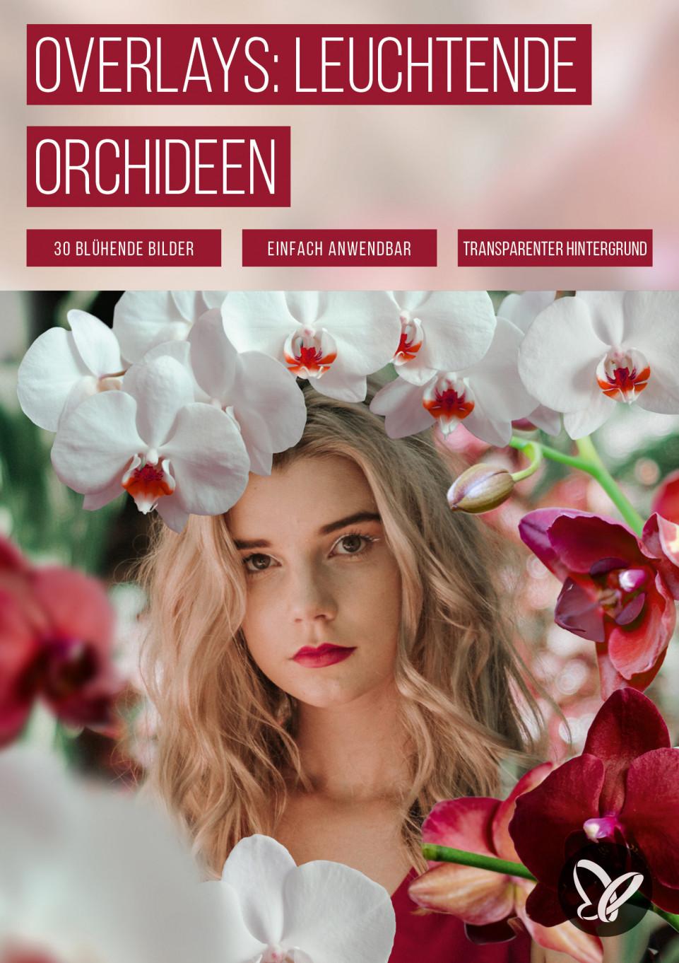 Bilder mit Orchideen vor transparentem Hintergrund