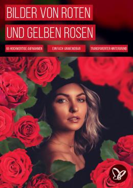 65 Bilder von roten und gelben Rosen für deine Fotos