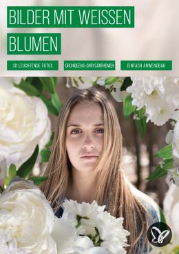Weiße Blumen: Bilder mit Orchideen, Chrysanthemen und gemischten Sträußen