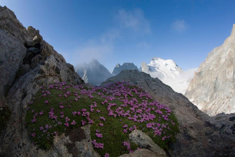 Bergfotografie: Gebirge und Wiese