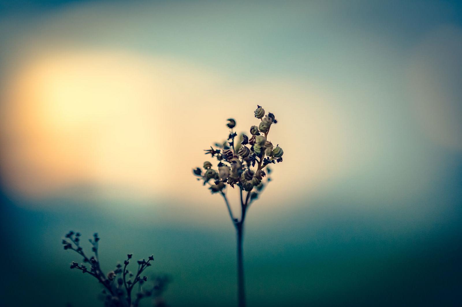 Herbst-Fotografie, Fotoshooting Nebel und Blume