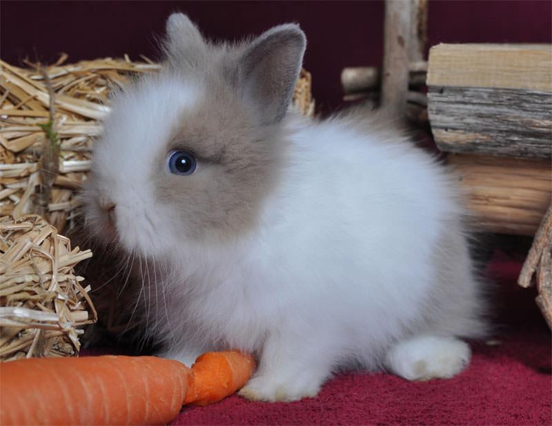 Foto eines Kleintieres