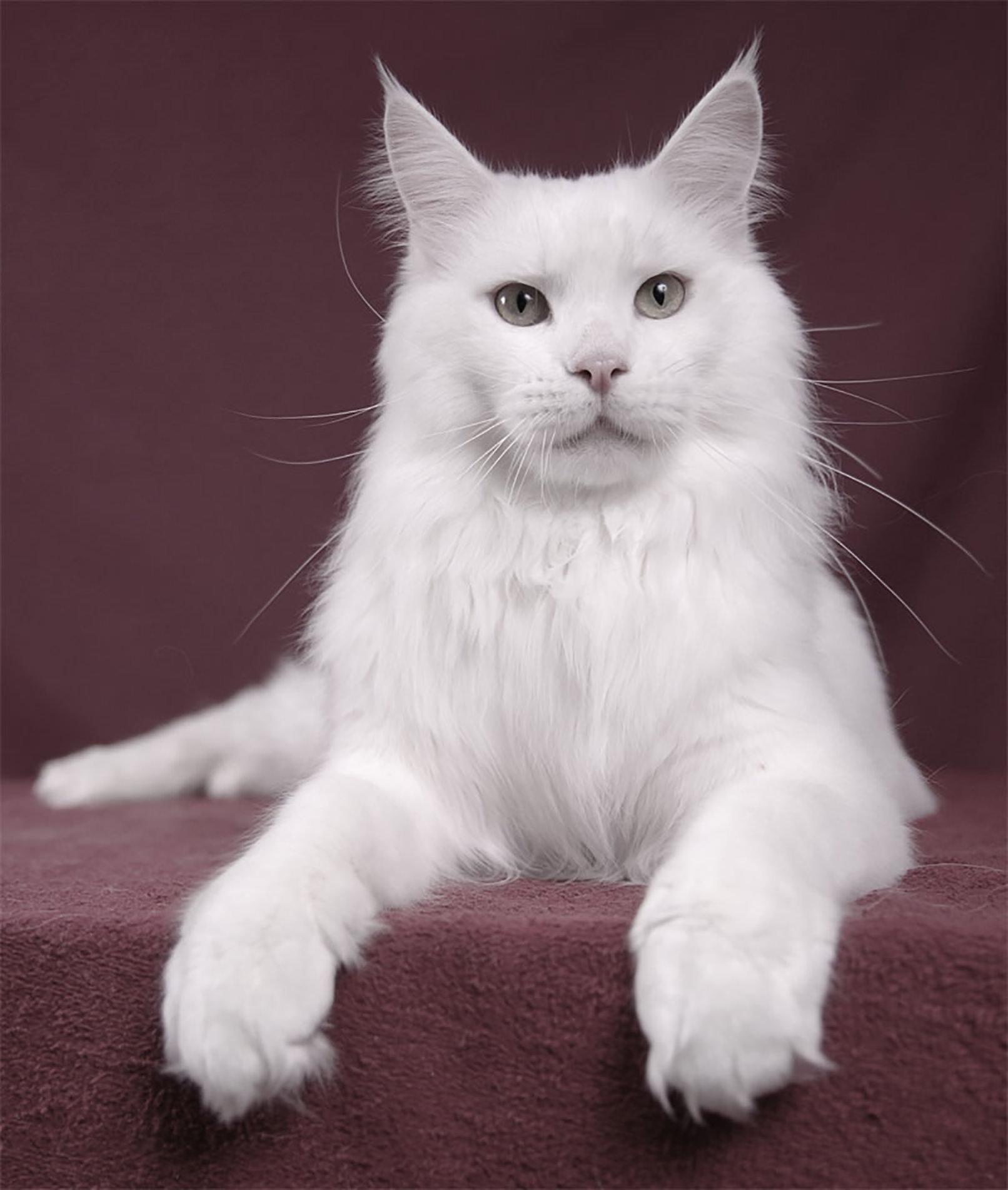 Professionelle Tierfotografie: Porträt einer Katze
