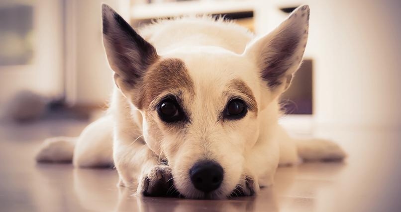Bild eines Hundes, bearbeitet in Adobe Camera Raw für den Kurs Fotoentwicklung mit Camera Raw – Tutorial zur Raw-Bearbeitung