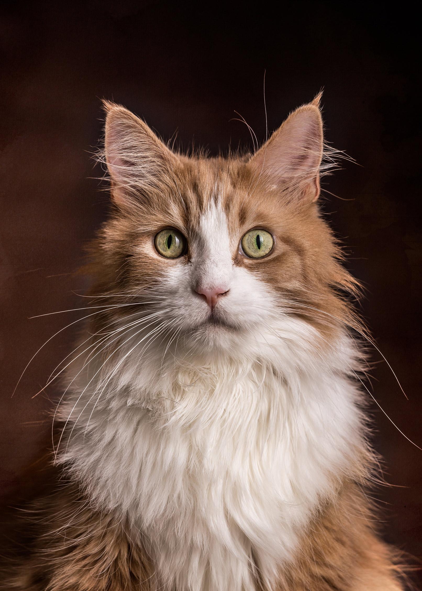 Katzen-Fotografie – Katzenportrait