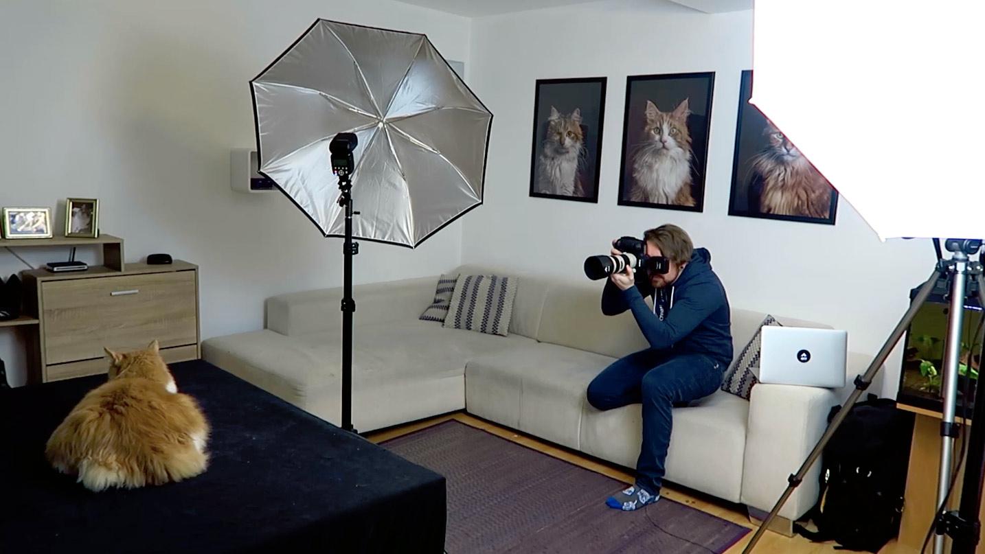 Hinter den Kulissen bei einem Katzen-Shooting