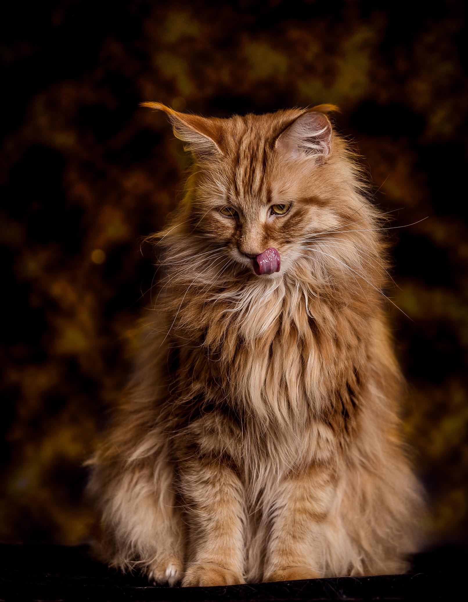 Katzen-Fotografie: Epische Katzenportraits selbst fotografieren