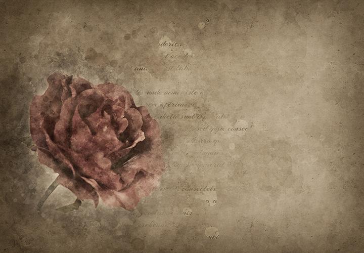 Schöne, kunstvolle Hintergrundbilder: Muschel- und Rosen-Bilder