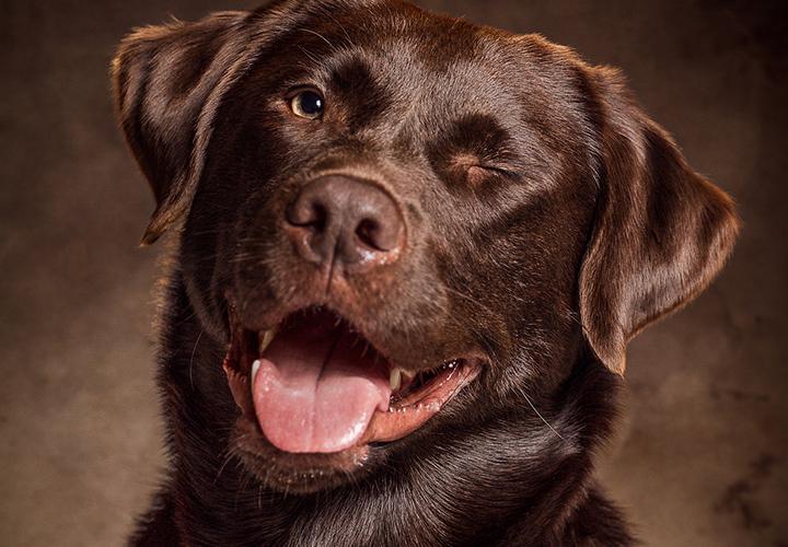 Hunde-Portraits fotografieren – Fotoshooting im Studio