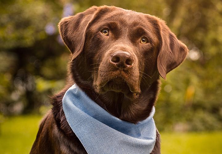 Hunde fotografieren: Outdoor-Hundeshooting