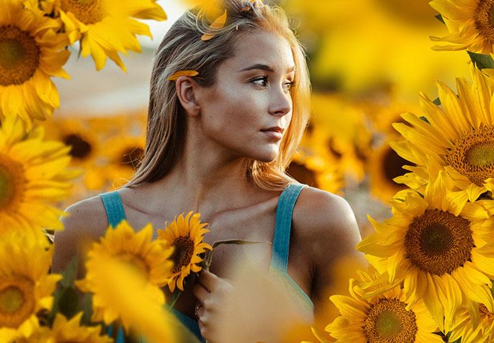 Bilder mit Sonnenblumen und Margeriten