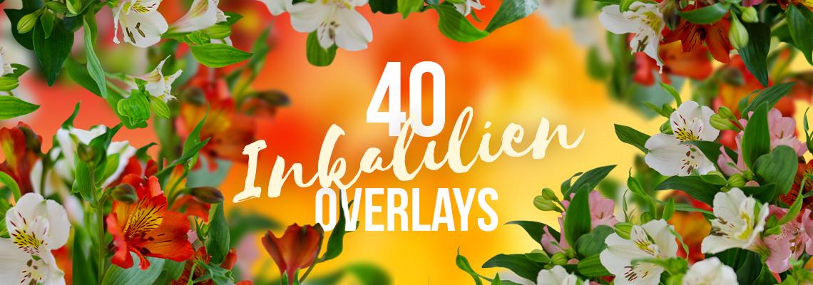 Inkalilien: farbenfrohe Bilder von Alstromerien