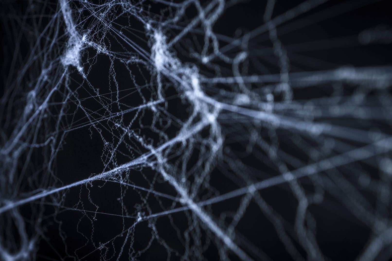 Spinnweben vor schwarzem Hintergrund