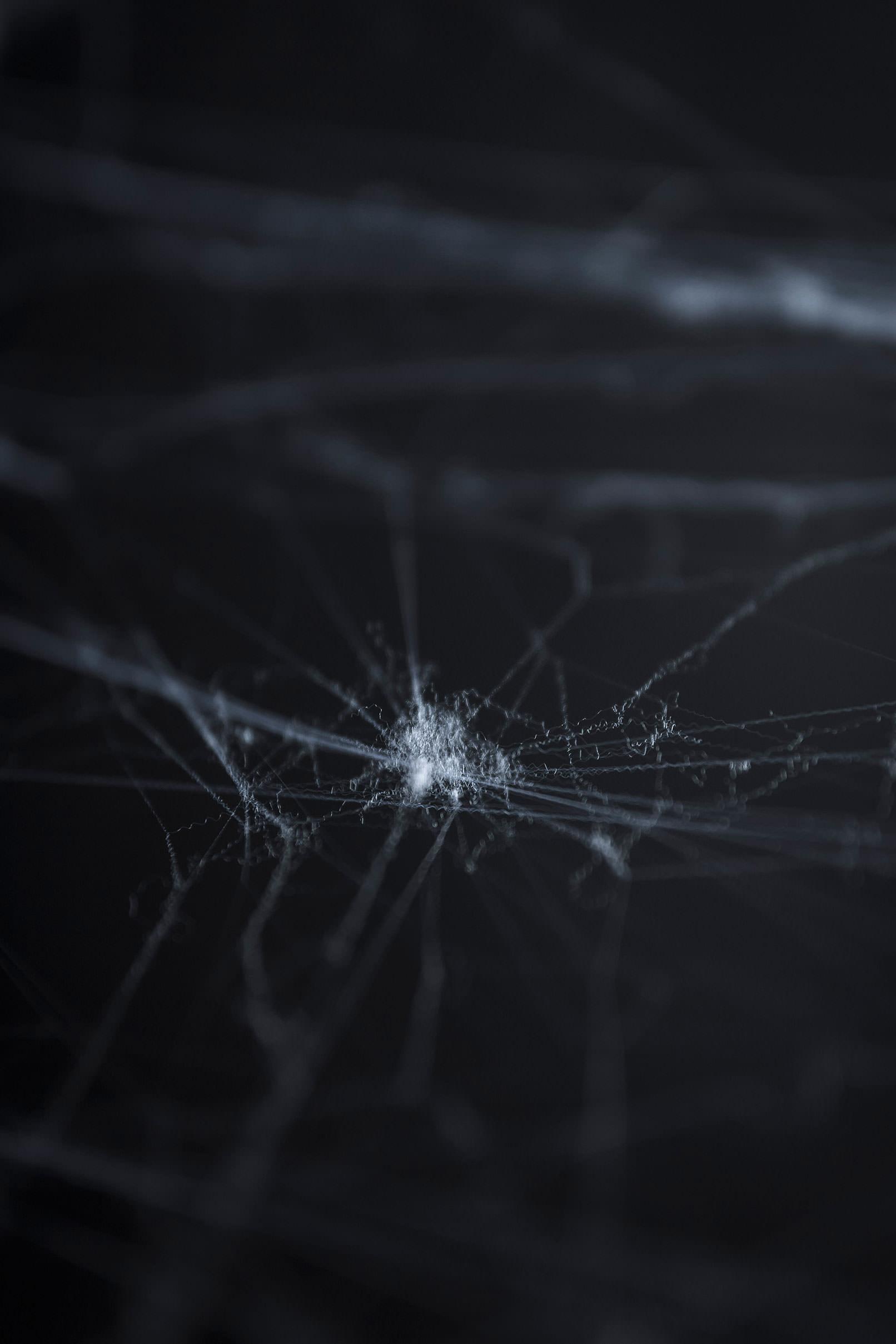 Spinnennetze vor schwarzem Hintergrund