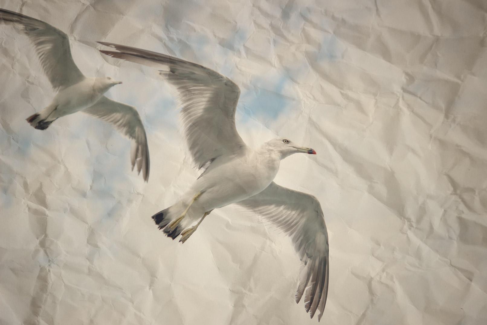 Zerknittertes Papier mit Vögeln