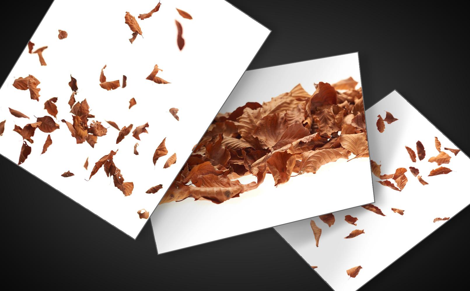 Herbstblätter und Herbstlaub als Texturen zur Bearbeitung von Composings.