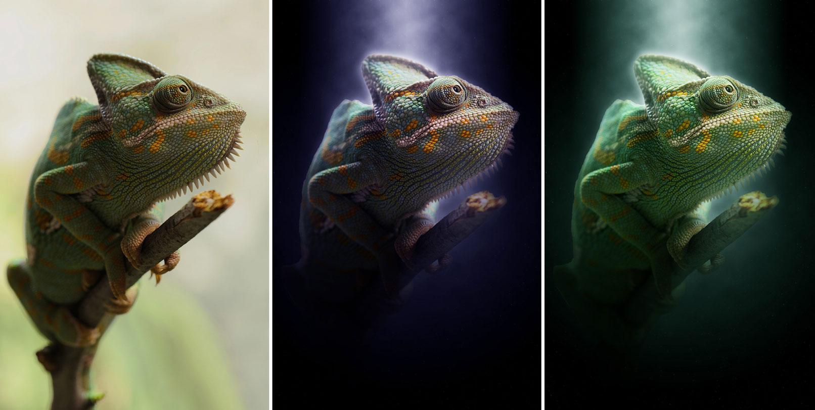 Chamäleon in mystischem Licht, erstellt mit einer Photoshop-Aktion