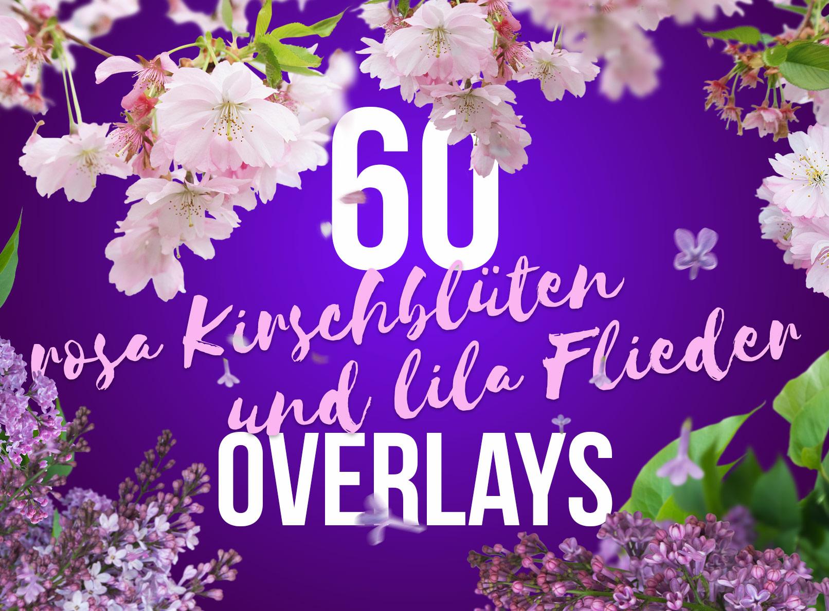 Bilder von Kirschblüten und Flieder