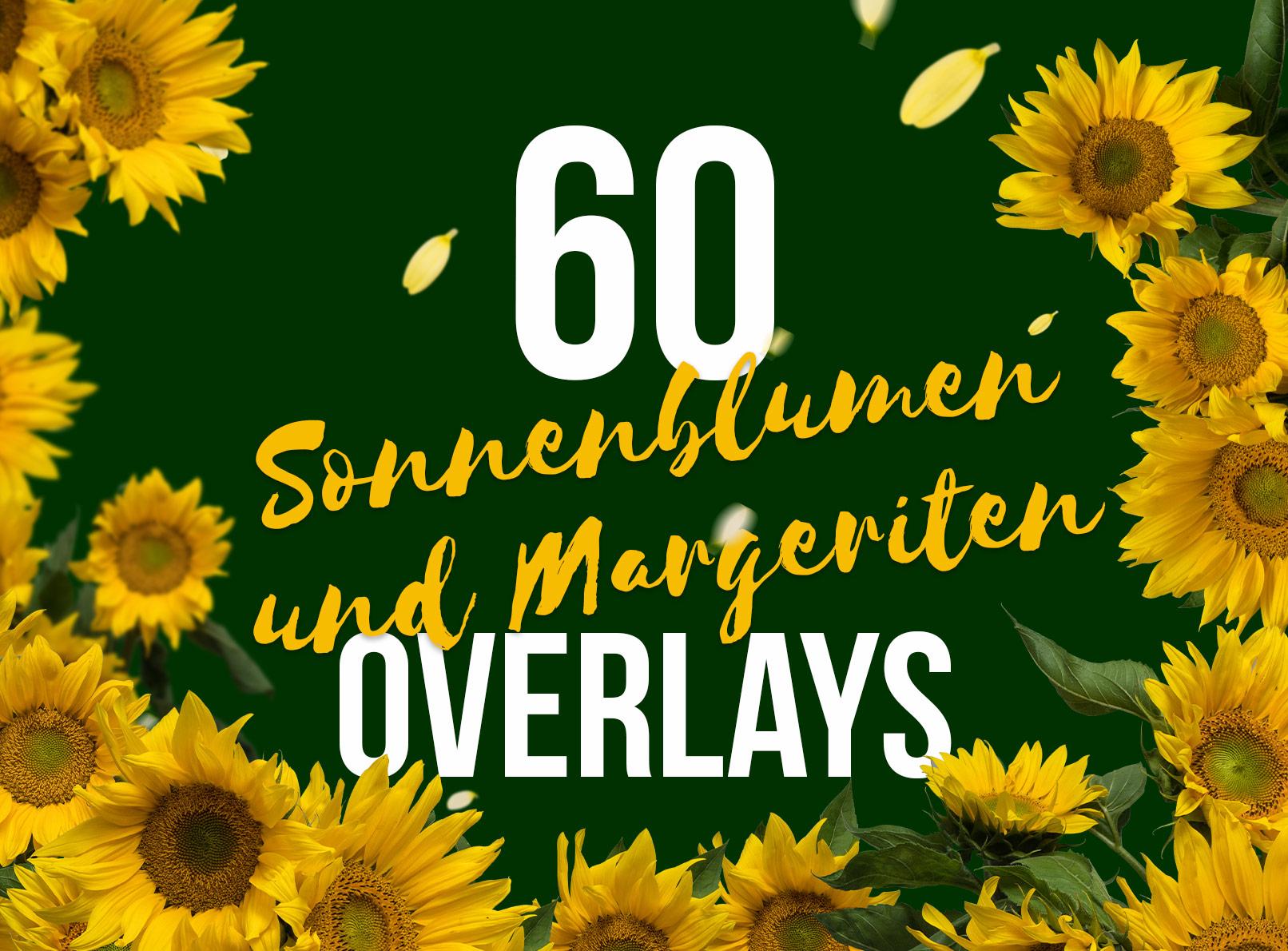 Bilder von Sonnenblumen und Margeriten