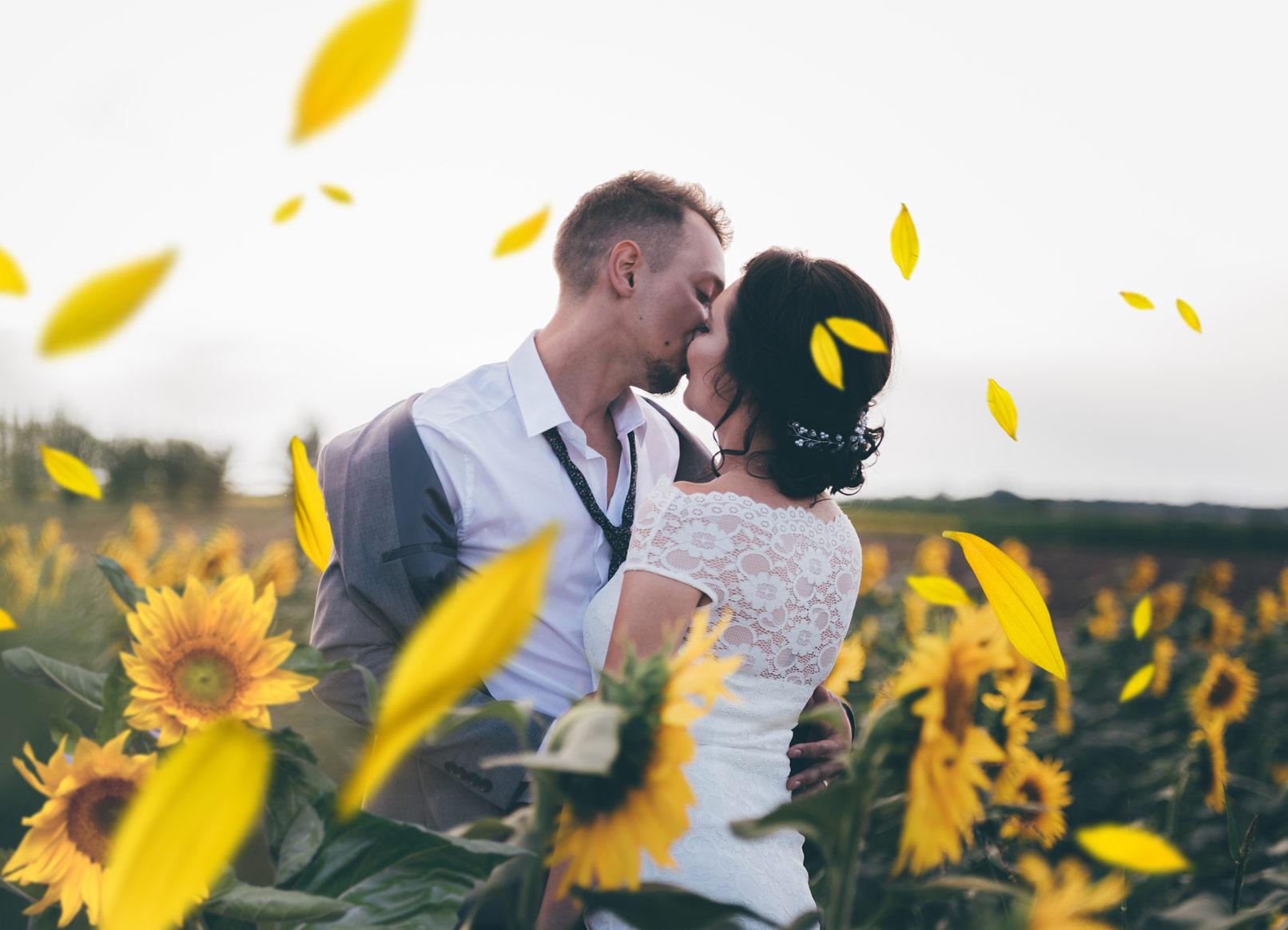 Bilder mit Sonnenblumen und Margeriten – gelbe Blüten vor transparentem Hintergrund