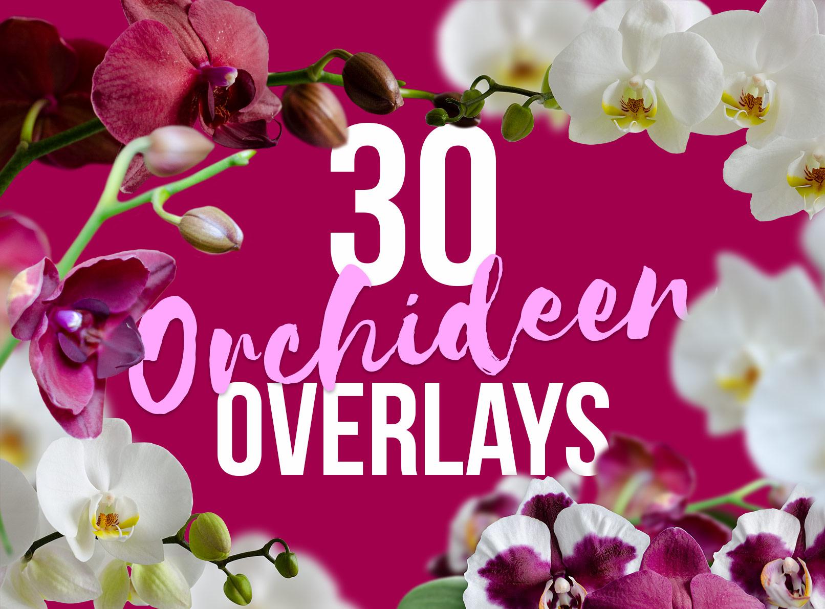 Bilder mit Orchideen