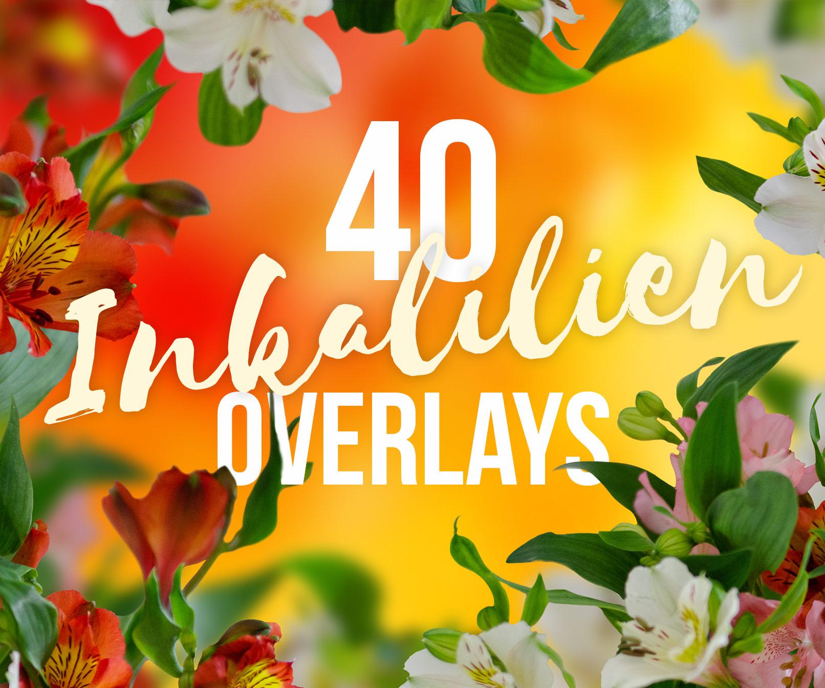 Bilder mit Inkalilien, Astromerien, rosa, weiße und rotgelbe Blüten