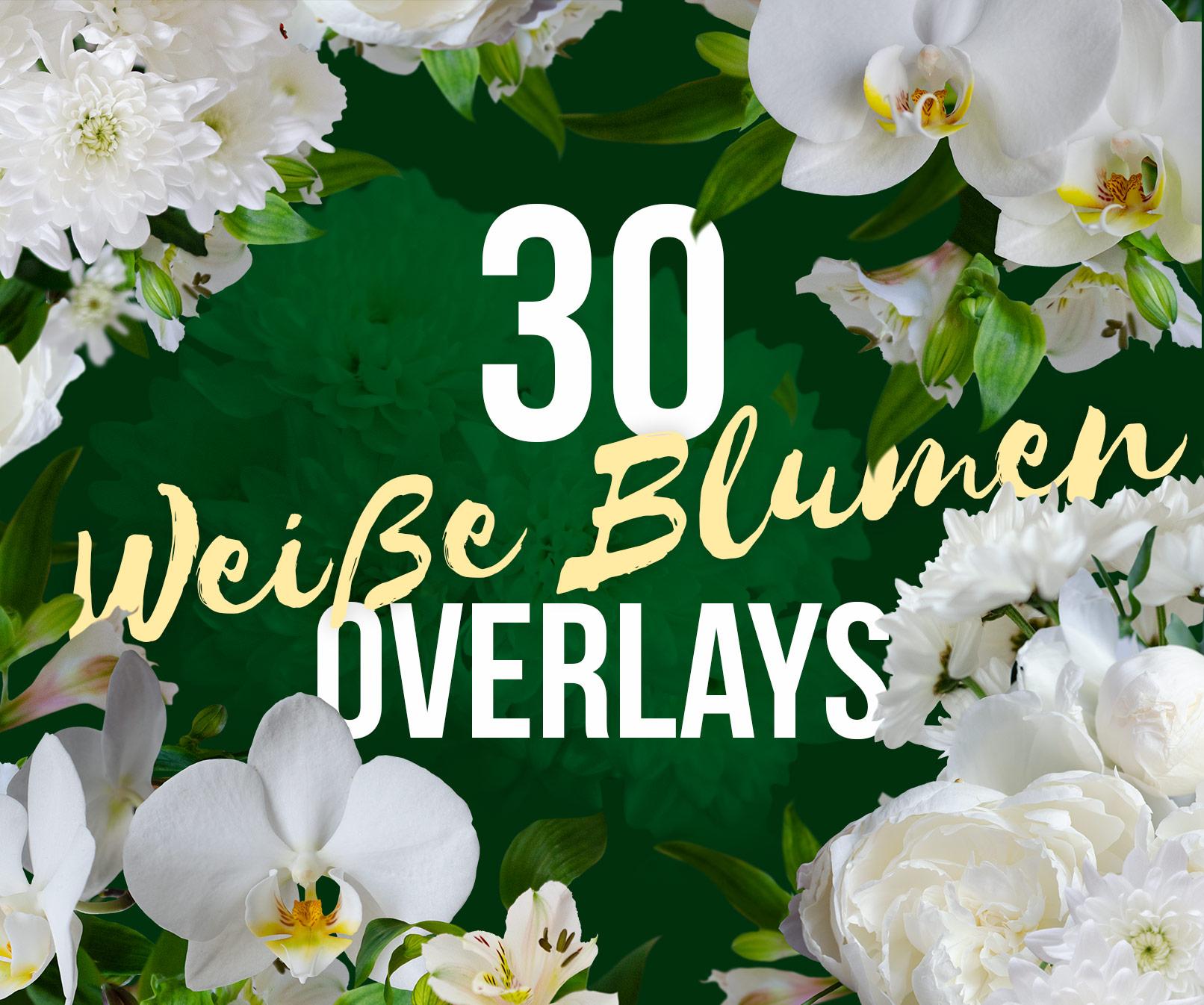 Weiße Blumen, unter anderem Orchideen und Chrysanthemen